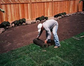 Yard cleaning services include sod installing