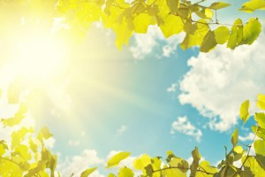 http://www.dreamstime.com/royalty-free-stock-photo-blue-sky-leaves-sunlight-background-image33013965