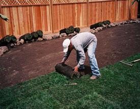 oakland sod installing